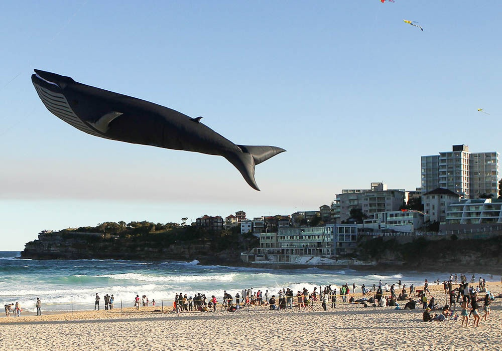 Avustralya'da bir rüzgar festivali.