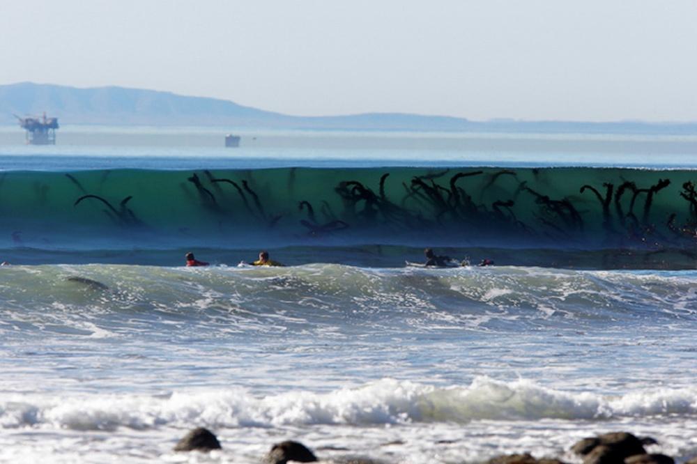 Denizin altında gizlenen bu yosunlar bir Ahtapot'un kolları gibi.